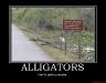 alligators-demotivational-poster-1253047327